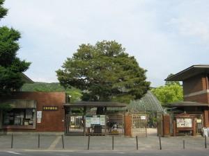 800px-動物園5030[1]