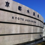 京都水族館でのランチはどうしよう?知って得するおススメ情報はコレだ!!